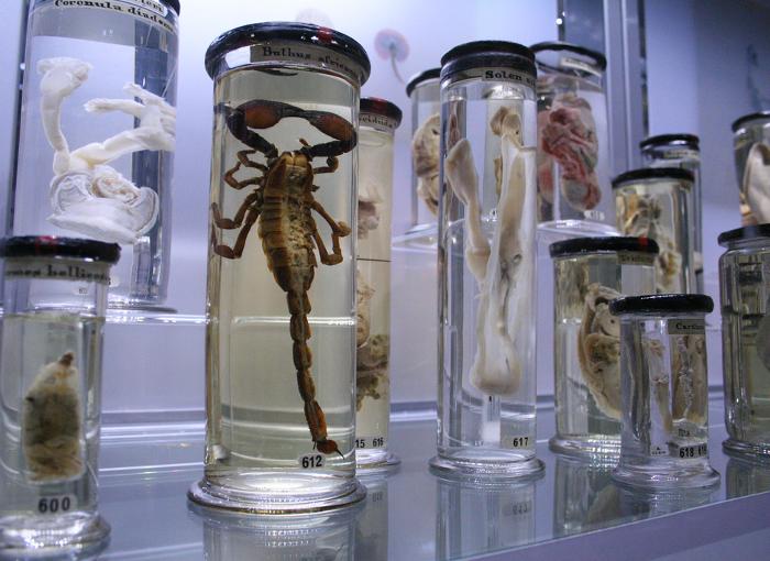Morbid Anatomy | I, Science